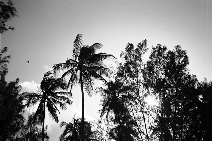 Ulrich-Knoblauch-Zanzibar.5