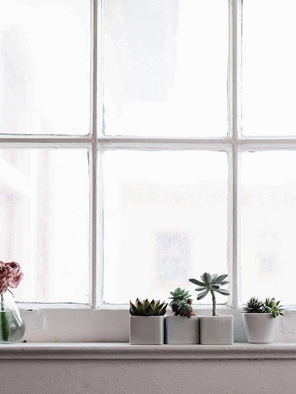 Oracle, Fox, Sunday, Sanctuary, White, Interiors, Exteriors, White, Wanderlust, Cactus, Windowsill