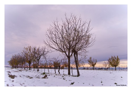 Neve dic 2012_0145fb.jpg