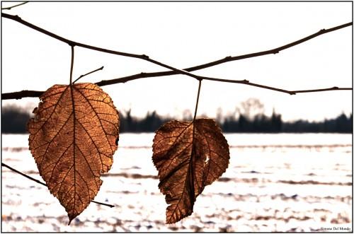 Neve dic 2012_0132 fb.jpg