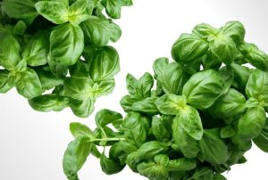 basil or Tulsi leaves natural remedy