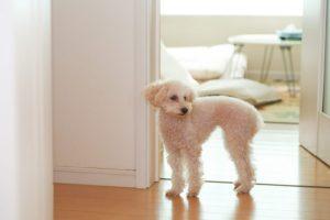 犬には第六感があるの⁉【犬のシックスセンスについて調べてみた】