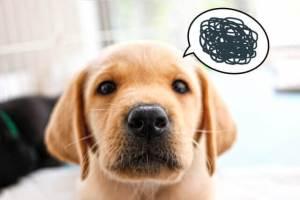 犬だって不満はあるよ!飼い主に不満があるときに見せる4つの行動。