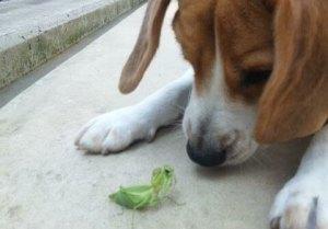 犬が虫を食べちゃった!犬はどうして虫をたべるの?