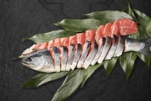 犬 鮭 サーモン