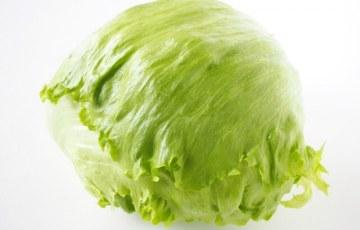 犬 レタス 野菜