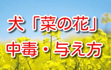 犬 菜の花 食べられる 中毒 注意点 効能