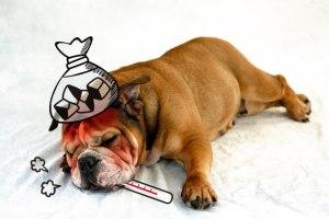 犬 スナップエンドウ 食べる 与える 大丈夫 生