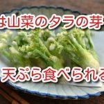 犬 山菜 タラの芽 天ぷら 食べられる 下処理 紹介