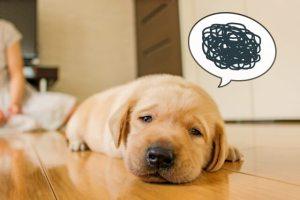 犬 黒米 くろまい くろごめ 白米 雑穀米 食べる 与える