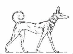 犬 ユーモア 珍しい犬種 面白い犬