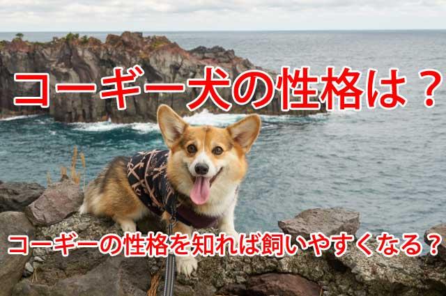 コーギー 犬 性格