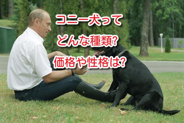 コニー 犬
