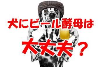 犬 ビール酵母