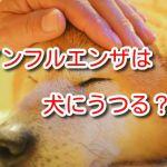 犬 インフルエンザ うつる