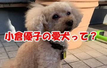 小倉優子 愛犬