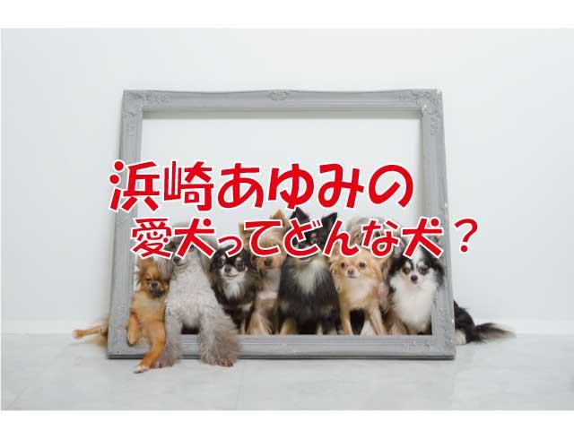 浜崎あゆみ 犬