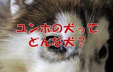 ユンホ 犬 テプン
