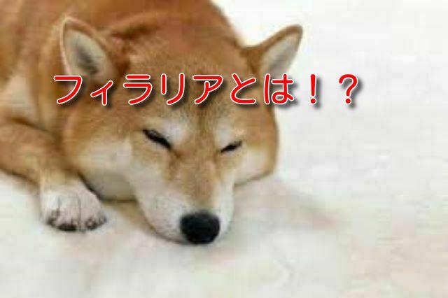 犬 フィラリア 初期 症状