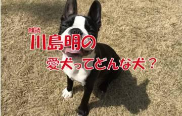 麒麟川島 愛犬 ペット