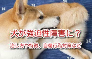 犬 強迫性障害