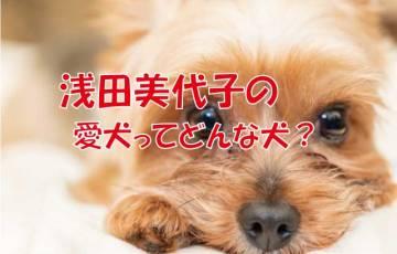 浅田美代子 保護犬
