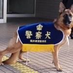 police-dog-type
