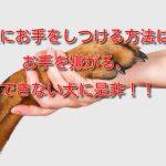 犬にお手をしつける方法は?お手を嫌がる、できない犬に是非!!