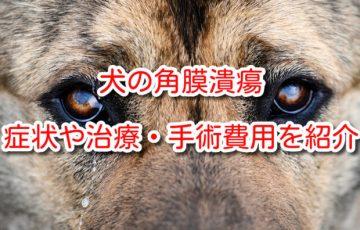 犬 角膜潰瘍