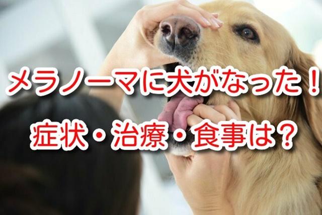 メラノーマ 犬