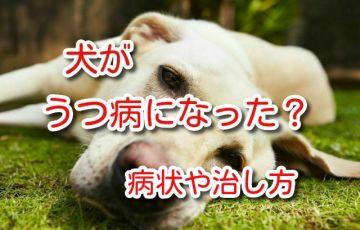 犬 うつ病