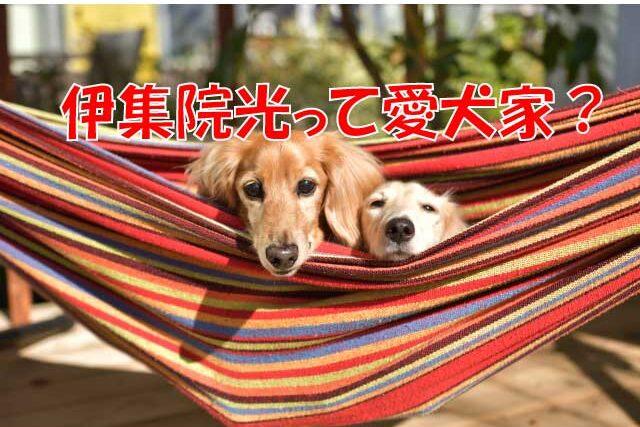 伊集院光 犬 ミニチュアダックス