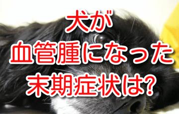犬 血管腫 血管肉腫