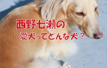 西野七瀬 愛犬 ダックス