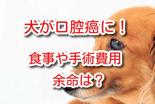 犬 口腔癌