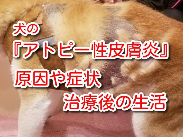犬 アトピー性皮膚炎