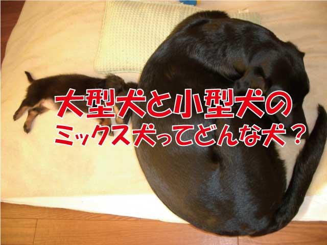 大型犬 小型犬 ミックス犬