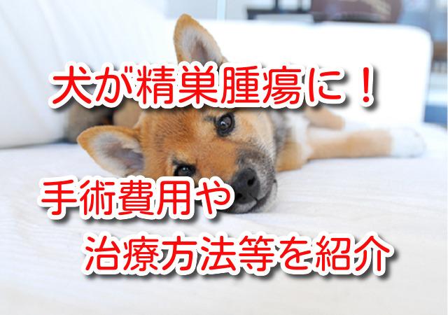 犬 精巣 腫瘍