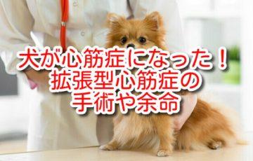 犬 心筋症