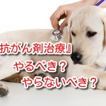犬 抗がん剤