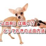 止血剤 犬