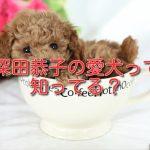深田恭子 犬