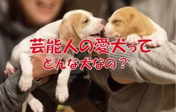 芸能人 愛犬 犬種
