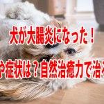 犬 大腸炎