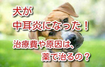 犬 中耳炎