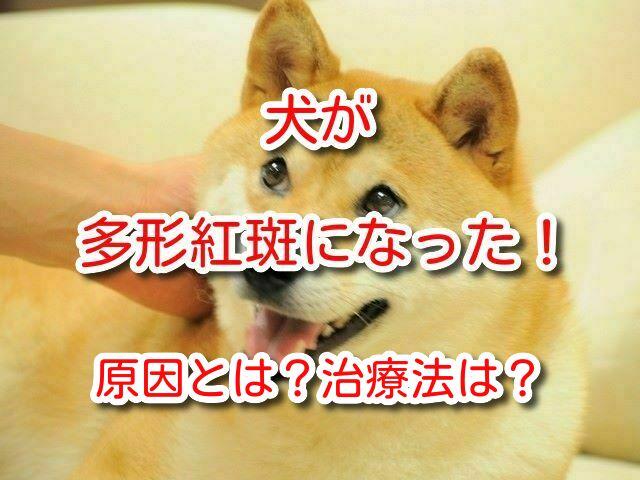 多形紅斑 犬