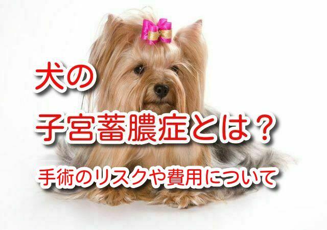 子宮蓄膿症 犬