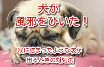 犬 風邪 咳