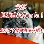 胆泥症 犬