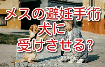 犬 メス 避妊 手術